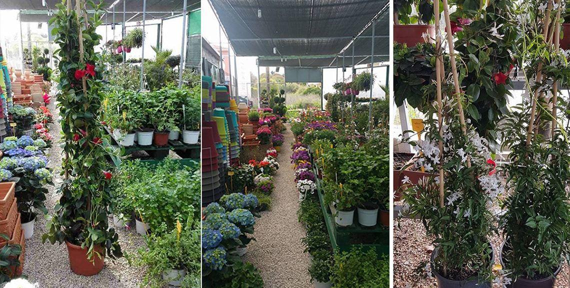 φυτώριο Γη & Κήπος -  Χίος